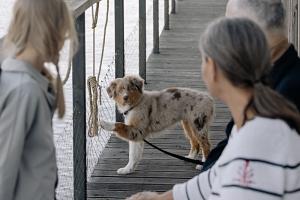 Astuce n° 2 pour lutter contre la solitude : adopter un animal de compagnie